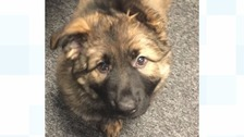 Cheshire Police has revealed the name of its newest police dog