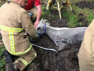 The horse was trapped in thick mud