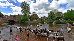 Horses are traditionally washed in the river.