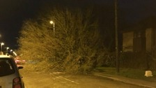 A tree and cable down at Lynn Road in Ely, Cambridgeshire