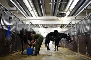 A member of the Household Calvary grooms horses in the Stable Lines in preparation for Prince Harry and Meghan Markle's wedding