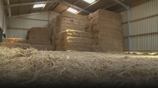 Hay bales in stable