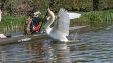 Swan attacks a kayaker