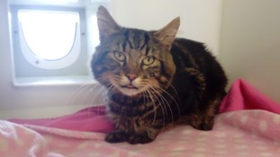 RSPCA staff are now trying to reunite 'Ford' with his owner.