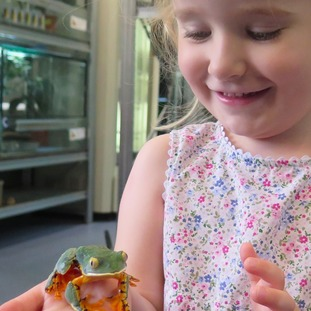 Conservationist Andrew Gray's granddaughter Sylvia with the frog named in her honour.