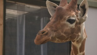 Gerry the Giraffe dies in Bristol wildlife park just one year after arriving.