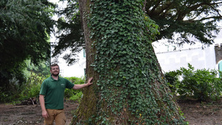 IoM's 'oldest tree' suffering from Dutch Elm disease prompts warning