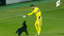 Footballers and security were unable to remove the pooch from the turf.