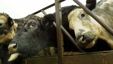 A case of mad cow disease has been detected on a farm in Aberdeenshire.