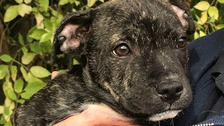 Nine-week-old puppy found dumped and tied to dustbin