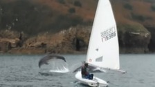 Dolphins make a splash at sailing club