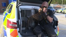 Rescue Staffie gets new job with as drug detection dog