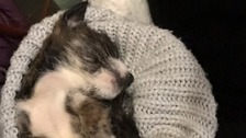 Reward offered to catch those who left puppy to die