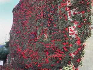 The knitted and crocheted poppies were donated by crafters across the world