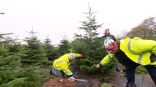 Charity Christmas Trees on sale in Guernsey