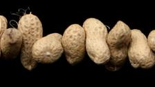 Study claims severe peanut allergies can be overcome