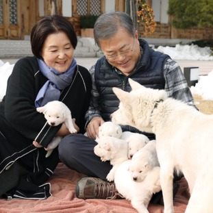 The rare dog breed, the Pungsan is said to be a 'national treasure' in North Korea.