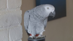 Parrot fashion! Rocco orders gifts online...