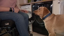 Meet Kevin, the incredible support dog!