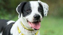 Raffa has lived at a Liverpool rescue centre for years