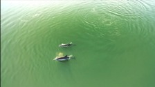 Stunning footage captured of dolphins in Plymouth Sound
