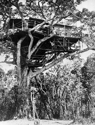 Treetops Hotel where Princess Elizabeth was staying when her father died