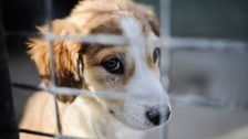 Consultation to ban pet shop sales of puppies and kittens