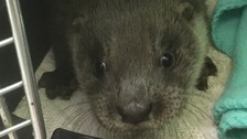 Otter cub rescued after being found huddled in shop doorway
