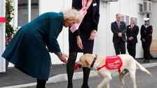 Duchess sees medical alert dogs in action