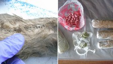Dead rats used to smuggle drugs and phones into Dorset prison