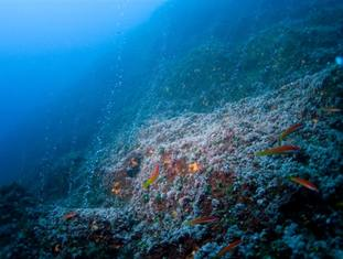 Hydrothermal vents are an important habitat in the oceans