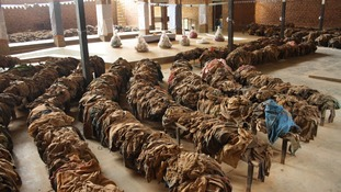 Genocide victims' clothing in the church of Nyamata, Rwanda