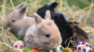 Three-week-old bunny stolen from North Somerset attraction