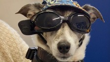 Dog made famous by wearing sunglasses dies