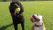 Dogs at risk of chocolate poisoning during Easter