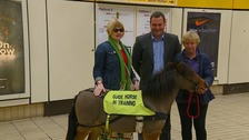 First guide horse for the blind comes to Britain