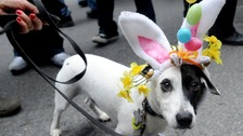 Why chocolate should be kept away from pets this Easter