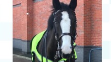 Police horse dies after falling onto metal pole at football match
