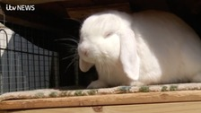 Rabbit owners warned over deadly virus