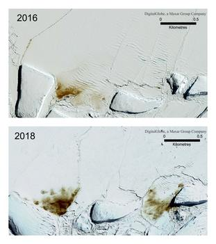 A combination of satellite photos shows the site of the Dawson Lambton emperor penguin colony in 2016 and 2018