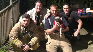 Pug rescued after falling down well in owner's garden