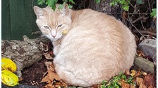 The nine-year cat - named Adam - had been with the family since he was nine months old.