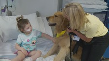 Milo, pictured Isabella who is five, is one of therapy dogs providing comfort to young patients