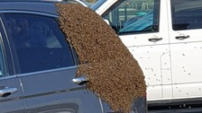 The swarm of bees settled on the rear of a parked car in Hayle, Cornwall.