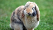 Rabbit owners urged to vaccinate pets after disease outbreak