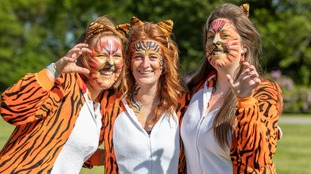 People dressed as tigers to mark Knowsley Safari's Tiger Parade