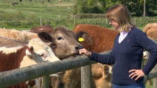 Minette Batters with cows