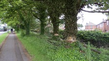Vandals have gouged one metre ring around each tree in Lyon Grove, Worsley, right down to the bare wood – a practice known as girdling.