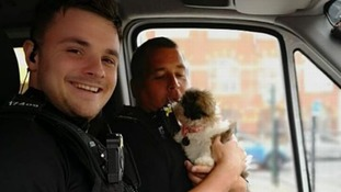 police with rescued puppy