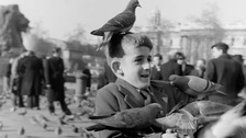 Museum of London opens archive to mark National Pigeon Day